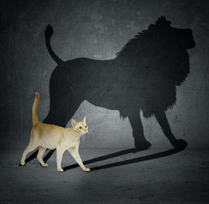 Ditt inre lejon, ditt Mod